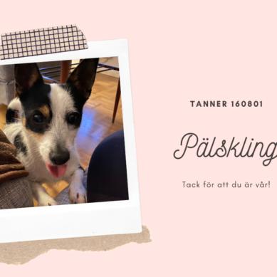 Välkommen Tanner!